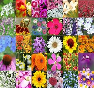 30 TYPES Wildflower mix 100% seed 1/4 POUND LB SEEDS ~! | eBay