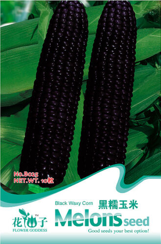 1 Pack 10 Seeds Black Waxy Corn Seed Vegetable Seed Healthy Green Food B025