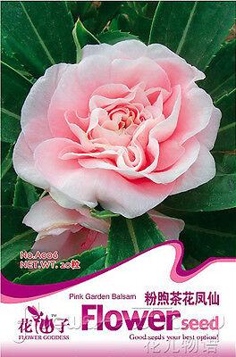 Balsam Seed  20 Pink Flower HOT Popular Natural