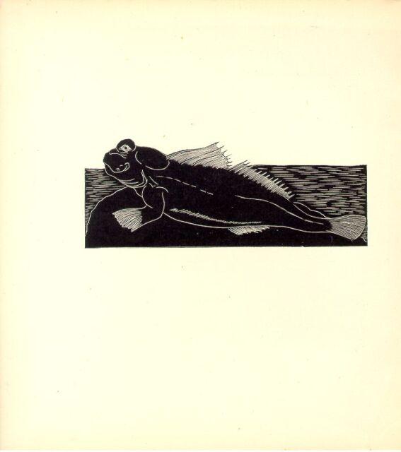 1928 AWESOME B&W etching woodcut: MUDSKIPPER Mud-skipper Fish ocean marine sea
