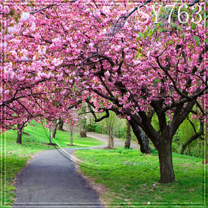 Spring outdoor beach 10x10 ft cp scenic photo background backdrop sy763 ebay - Backgrounds springtime ...
