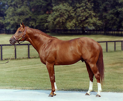 SECRETARIAT - BIG RED - 1973 TRIPLE CROWN WINNER HORSE RACE RACING 8X10 PHOTO
