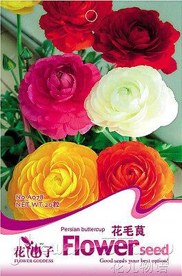 Flowers Seeds Ranunculus Asiaticus Seeds Hot Home Garden Plant