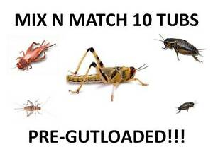 Livefood-Locusts-Crickets-Mealworms-Waxworms-MIX-N-MATCH-1-10-pre-pack-tubs