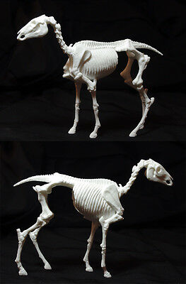 Artist Resin Sculpture, Horse Skeleton Anatomy Model, Classic Breyer 1:12 Scale