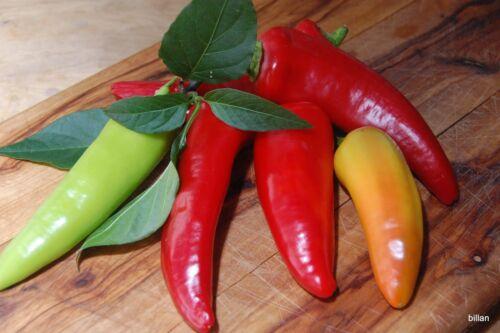 Chilli HUNGARIAN HOT WAX 15 Seeds (HEIRLOOM / ORGANIC) Fruit Pepper