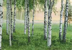 fototapete nordic forest 366x254 landschaft schweden birken am see b ume norway ebay. Black Bedroom Furniture Sets. Home Design Ideas