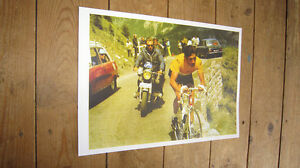 Eddy-Merckx-Tour-de-France-Legend-COLOUR-POSTER