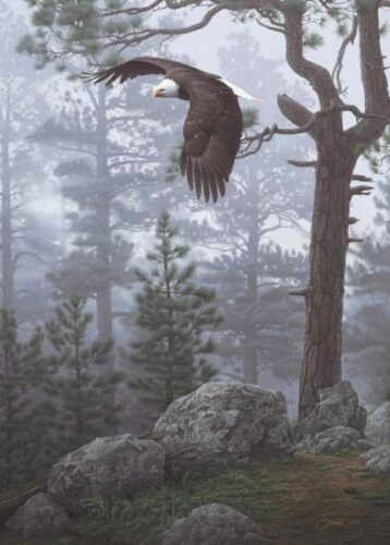 Shrouded Forest (detail) by Daniel Smith Art Print Poster - Eagle Wildlife 24x36