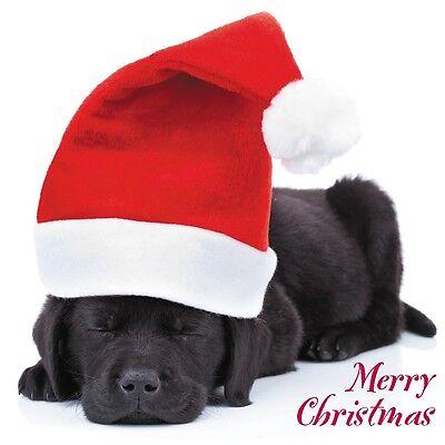 8 x Christmas Blank Cards Pack - Pug Chihuahua Yorkie Dachshund Westie Collie