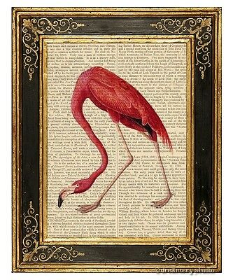 Pink Flamingo Art Print on Antique Book Page Vintage Illustration Birds