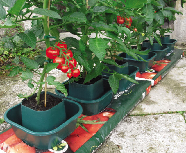 Tomato & Vegetable Plastic Growbag Pots (set of 3) - special offer price