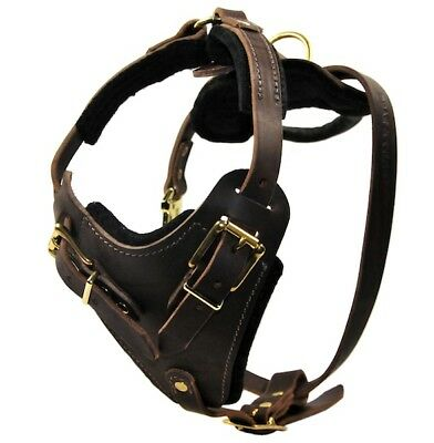 The Boss Leather Dog Harness with Solid Brass Hardware