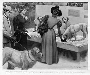 Dog Show Madison Square Garden New York Annual Dog Show By Max Klepper Ebay