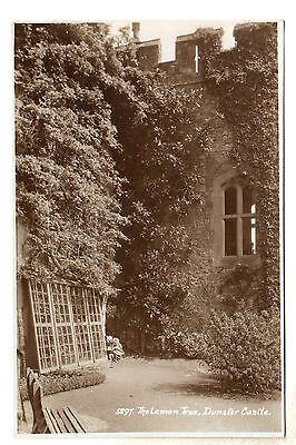 The Lemon Tree Dunster Castle Real Photo Postcard c1940