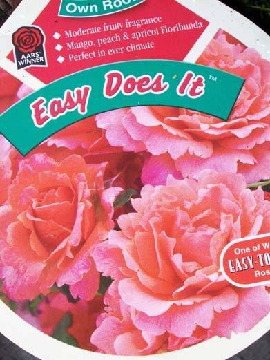Easy Does It (PPAF) Peach Pink Rose 2 Gal. Bush Healthy Live Plants Plant Roses