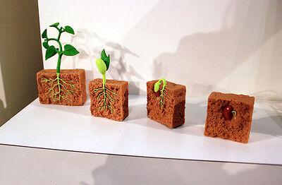 LIFE CYCLES of a GREEN BEAN PLANT # 662416 ~ FREE SHIP/USA w/$25+SAFARI Products