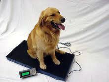 Vet-Animal-Veterinary-Pet-Livestock-Platform-Digital-Scale-400-lbs-4-H-Farm