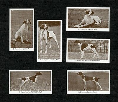 POINTER DOGS OF YESTERYEAR 2ND SERIES 6 NAMED DOG PHOTO TRADE CARDS