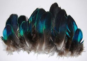 25-Pcs-PEACOCK-Mini-BLUE-WINGS-Natural-Feathers-1-4-034-Pads-Trim-Hats-Craft-Bridal