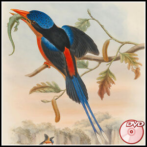 John-Gould-039-s-BIRDS-of-Asia-New-Guinea-Papuan-islands-Great-Britain-3-DVD-039-s