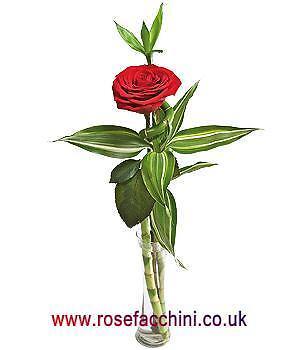 Rosefacchini's Caravan Supplies