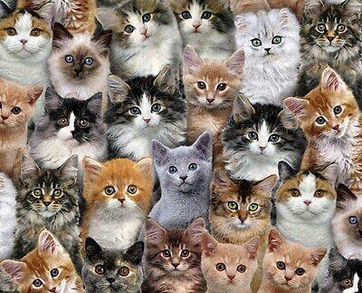 Fat Quarter Adorable Pets Kittens Cats Cotton Quilting Fabric Elizabeth's Studio