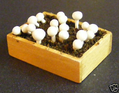 1:12 Scale Growing Mushrooms In A Box Dolls House Miniature Garden Accessory