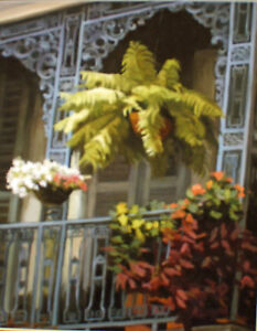 Balcony-Flowers-New-Orleans-Art-Print-Matted-Print