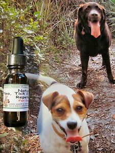 NATURAL-FLEA-TICK-AND-MOSQUITO-REMEDY-FOR-DOGS