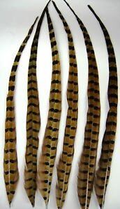 """6 NATURAL RINGNECK Grizzly Hair Extensions 15-20"""" Nice"""