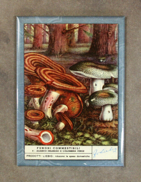 Vintage Style SAFFRON MILK CAP MUSHROOMS Fridge Magnet (#4),  Advertising Card