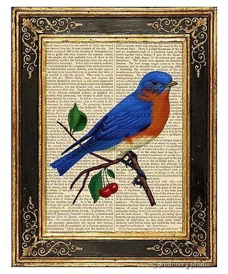 Eastern bluebird Art Print on Antique Book Page Vintage Illustration Garden Bird