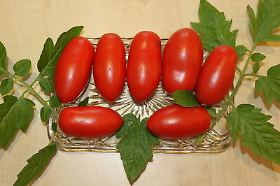 Tomate Riesen - Flaschentomate San Marzano - Typ- 15 S.