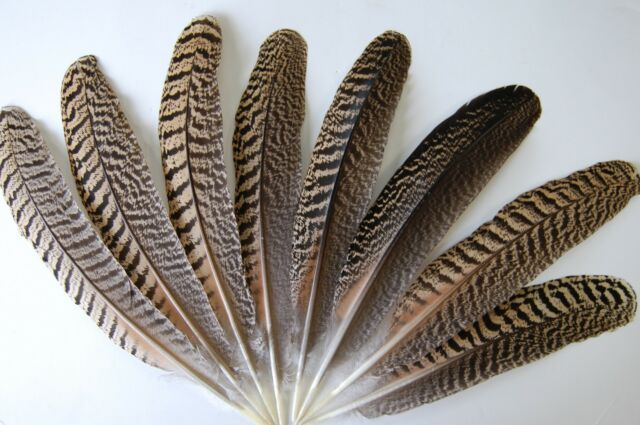 """50 Pcs PEACOCK QUILLS 8""""-12"""" All NATURAL Quills; Brand New Costume/Dress/Hat/Pen"""
