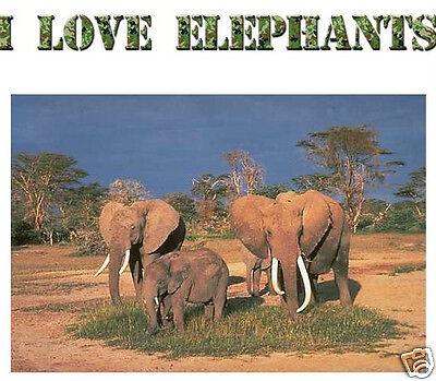 I LOVE ELEPHANTS  wall sticker  or iron on t shirt transfer. Choose