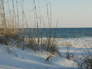 Sand-Dunes-Canvas-Pictures-16-X20-Art-Beach-Sea-Prints-Modern-Wall-Hanging