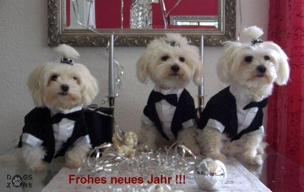 Hundesmoking Hundesmoking Hundesmoking LAS VEGAS  dogszone  Smoking für Hunde,Hochzeit     Neuartiges Design  d862f8