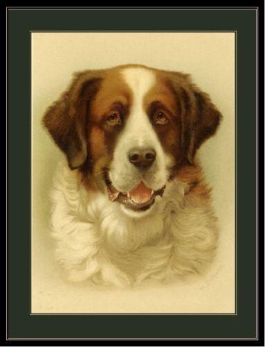 English Picture Print Saint St Bernard Dog Head Art