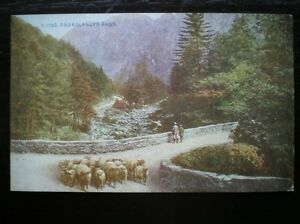 POSTCARD-ABERGLASLYN-PASS-SHEPARD-WITH-HIS-FLOCK-OF-SHEEP-MERIONETHSHIRE