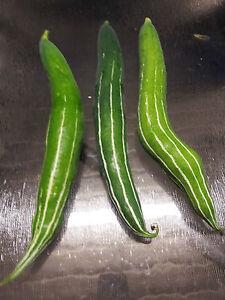 Snake-Gourd-Chinese-Cucumber-Potlakaaya-Pudalankaai-Padavalanga-5-Seeds