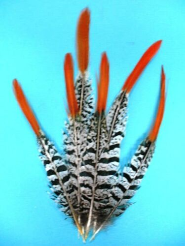 """15 Pcs LADY AMHERST PHEASANT Feathers 4-12/"""" RED TIP Top-Quality//Craft//Halloween"""