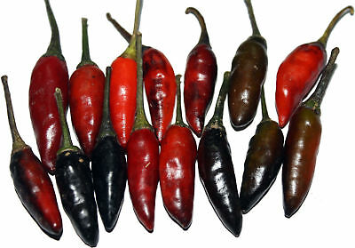 VEGETABLE  HOT CHILLI PEPPER KRISHNA JOLOKIA   12 SEEDS