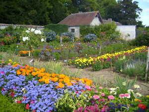 Flowers-Growing-30-Books-CD-ROM-Floriculture-Garden-Potpourri-Plants-Roses-Farm