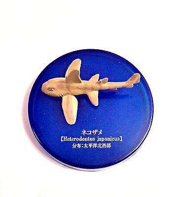 Kaiyodo Takara Tomy Yujin Deep Sea Japanese Bullhead Shark Fish Figure Rare!