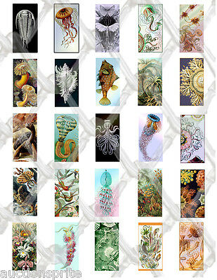 "25  Ernst Haeckel Images 24x48mm Collage Paper 8.5""x11"" - Glass Tile Pendants"