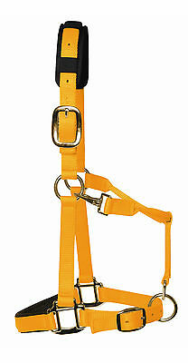 Top Quality Padded Nylon Headcollars from KM Elite with or without Lead Ropes