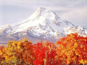 10146-Postcard-Cascades-Volcanoes-Mount-Hood-Oregon
