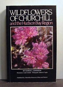Wildflowers-of-Churchill-and-Hudson-Bay-Region-Northern-Manitoba-Canada
