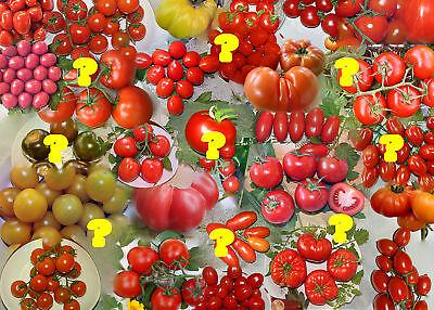 Tomaten-Überraschung - 50 Samen